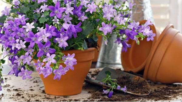 Благоприятные периоды для поселения растения в другое место